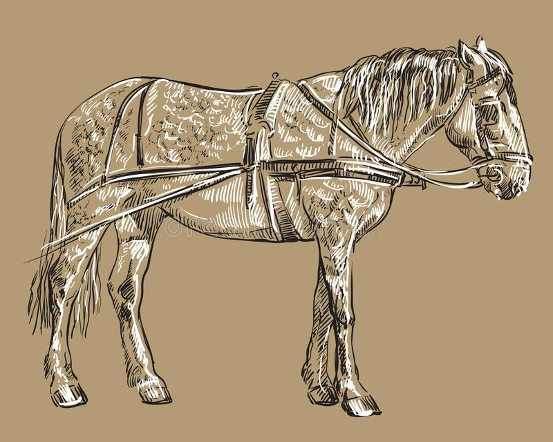Лошадь проводки вектора иллюстрация штока
