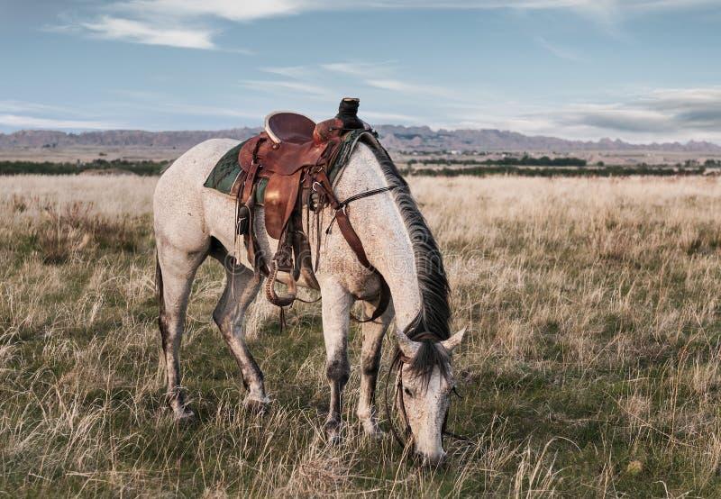 Лошадь ранчо пасет в неплодородных почвах стоковые изображения rf