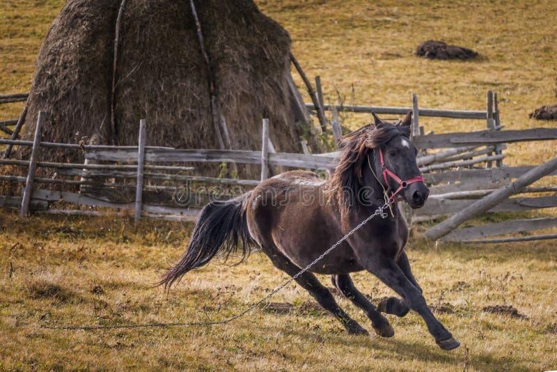 Лошадь, Румыния стоковое изображение rf