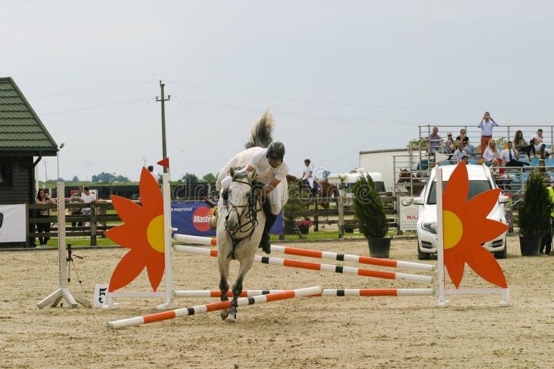 лошадь скачет мое портфолио к гостеприимсву стоковое фото rf