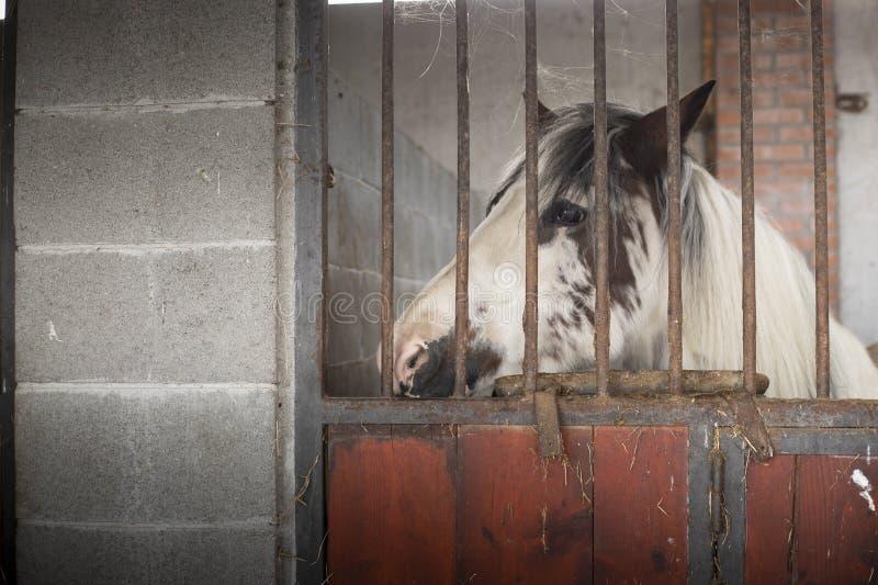 Лошадь смотря через стабилизированную дверь стоковые фото