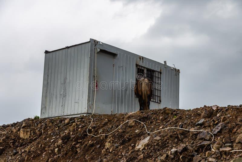 Лошадь стоит около контейнера металла вверху очень гора, регион Краснодар, Россия стоковые фотографии rf