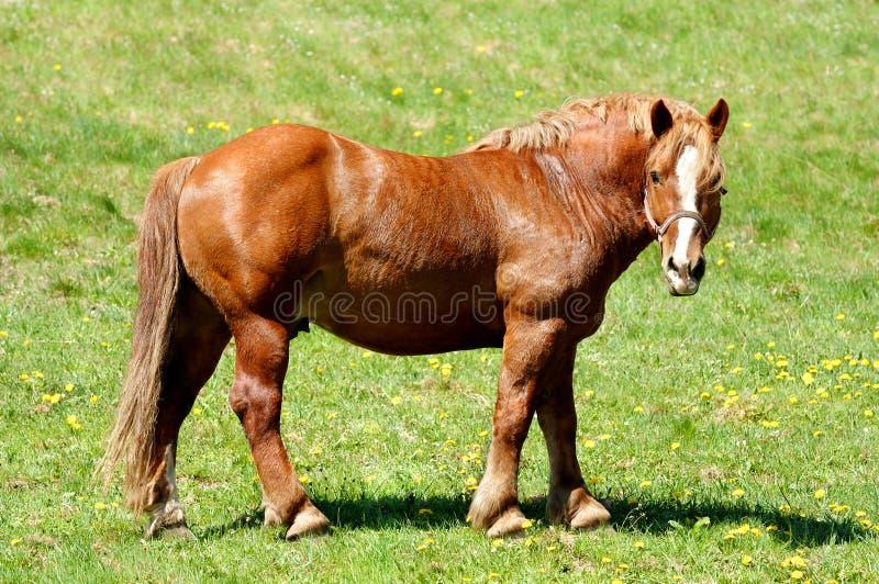 Лошадь стоя на лужке стоковые фотографии rf