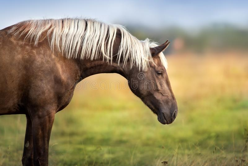 Лошадь с длинной гривой стоковое фото rf
