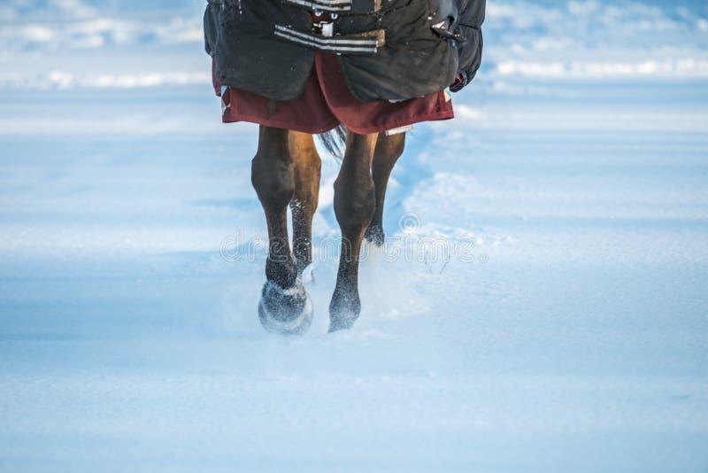 Лошадь с одеждами в ходе wintertime стоковая фотография