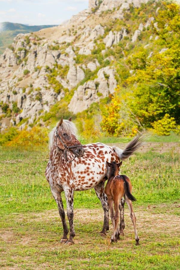 Лошадь с осленком стоковое изображение