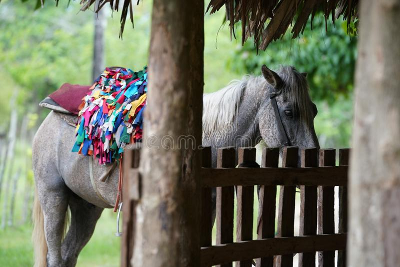 Лошадь с положением седловины около загородки и дерево с запачканной предпосылкой в Доминиканской Республике стоковые фотографии rf
