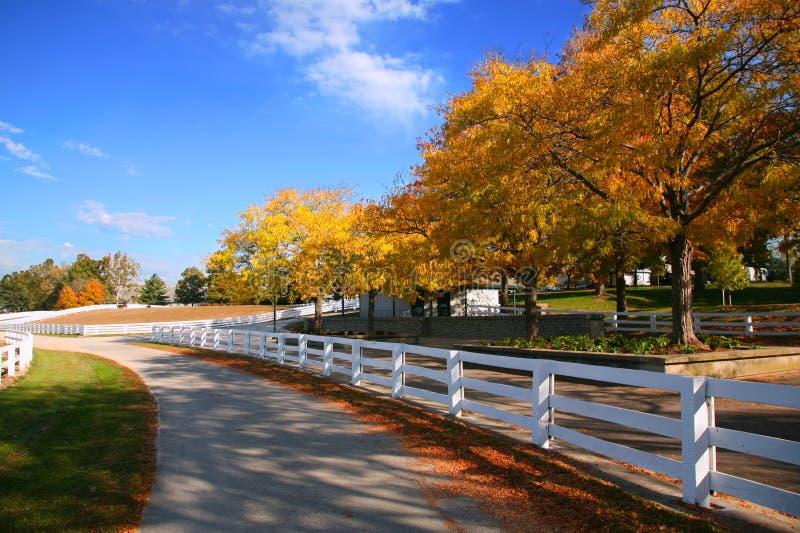 лошадь фермы Кентукки стоковое фото