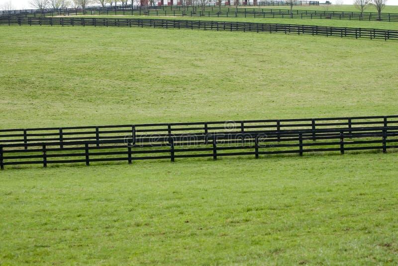 лошадь фермы Кентукки стоковая фотография rf
