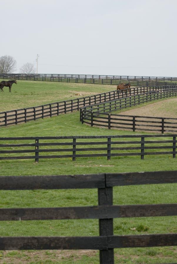 лошадь фермы Кентукки стоковые фотографии rf