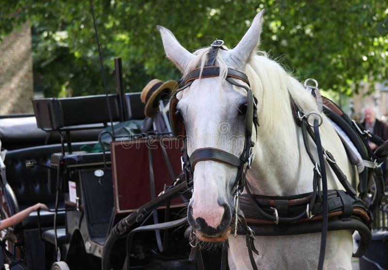 лошадь экипажа стоковая фотография rf