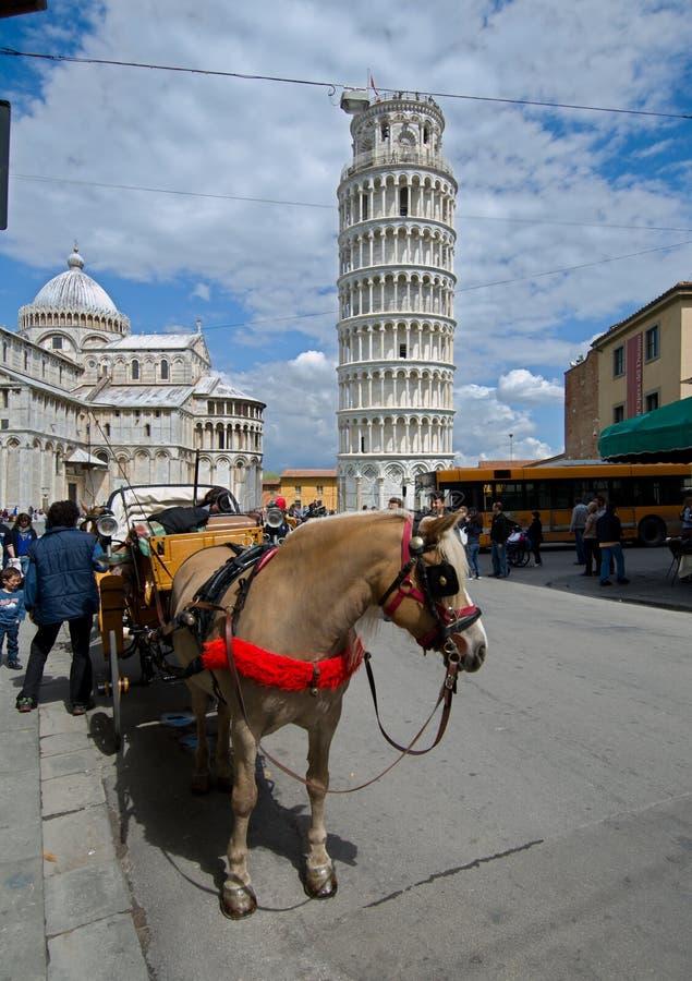 лошадь экипажа pisa стоковые фото