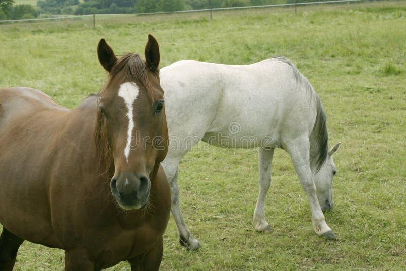 Download лошадь стоковое фото. изображение насчитывающей головка - 475230