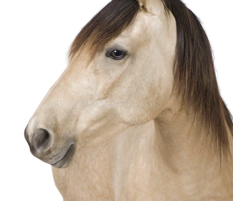 Download лошадь стоковое изображение. изображение насчитывающей сливк - 6856445