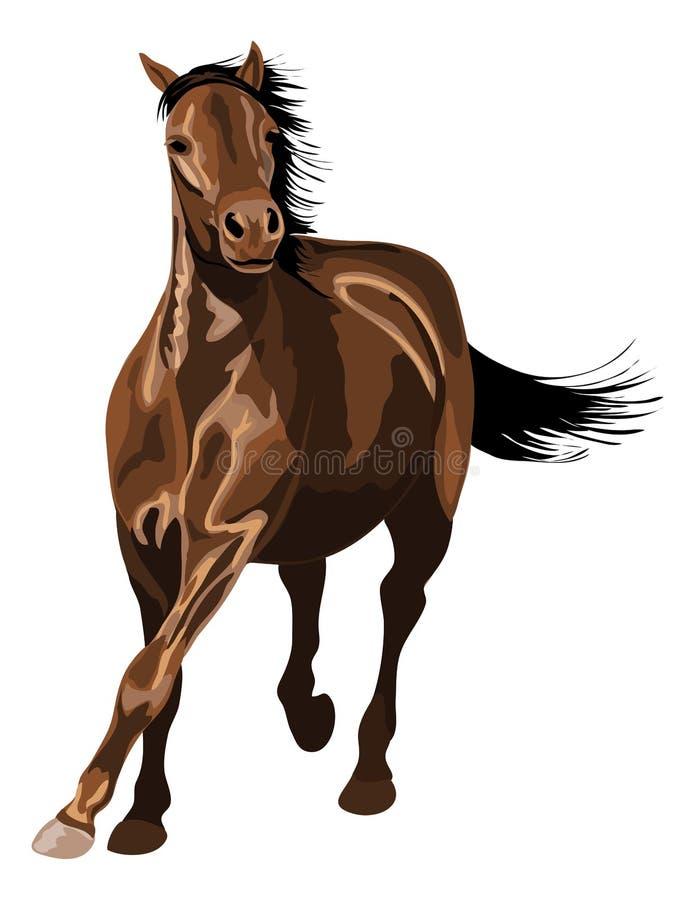 Лошадь galloping в солнечности иллюстрация штока