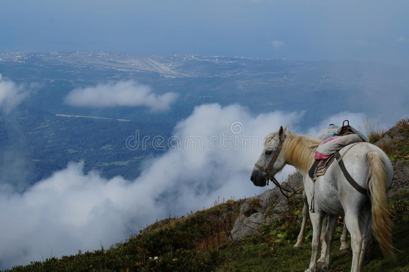Лошади в горах стоковые изображения rf