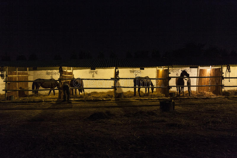 Лошади в конюшне на ноче стоковое фото