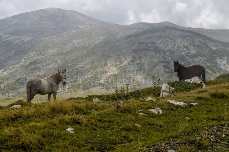 Лошади в природе стоковые фотографии rf