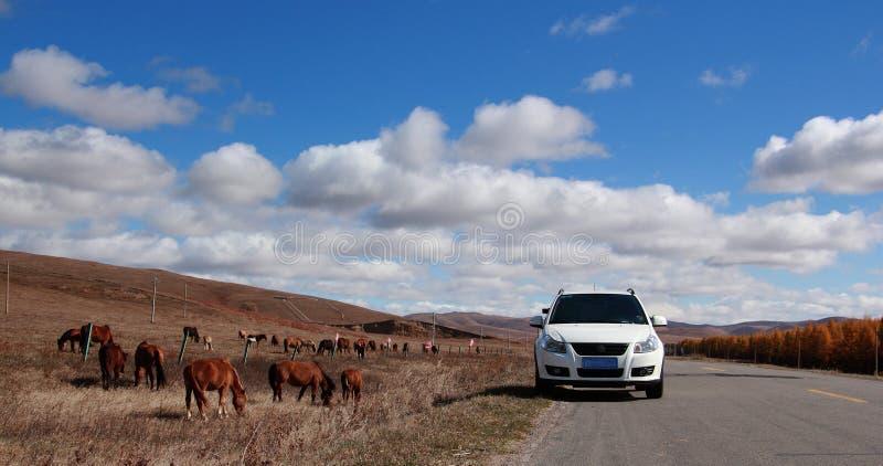 Лошади в ферме лошади злаковиков стоковые изображения rf