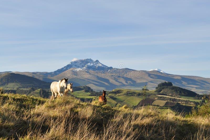 Лошади горы стоковые изображения rf