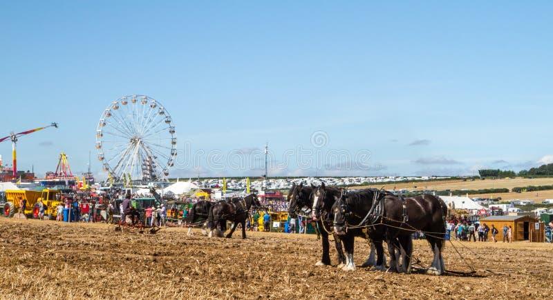 Лошади графства работая на земле выставки стоковое фото