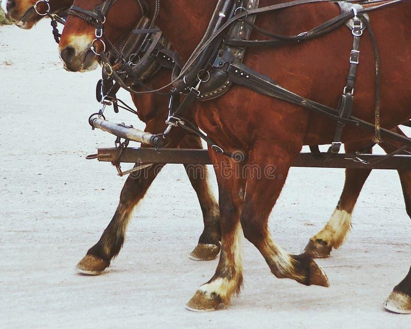 Лошади дилижанса стоковое изображение