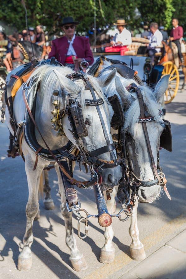 Лошади и экипажи стоковая фотография rf