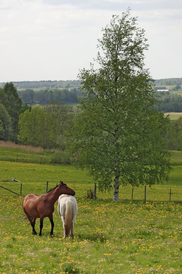 Лошади на луге. стоковое фото