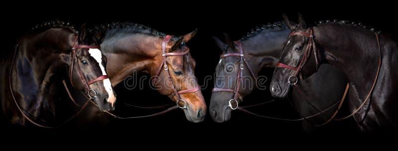 Лошади на черноте стоковые изображения rf