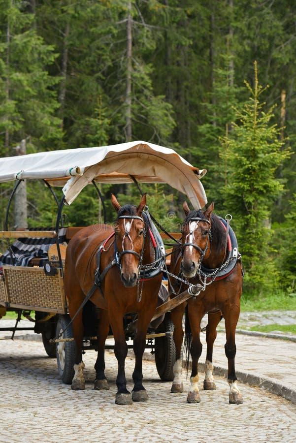 Лошади обузданные в тележке стоковая фотография rf