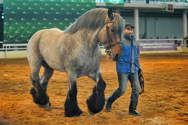 Download Лошади породы выставки редакционное фотография. изображение насчитывающей немного - 40585127