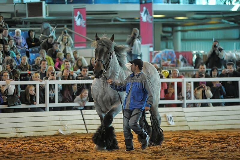 Download Лошади породы выставки редакционное изображение. изображение насчитывающей конноспортивно - 40585220