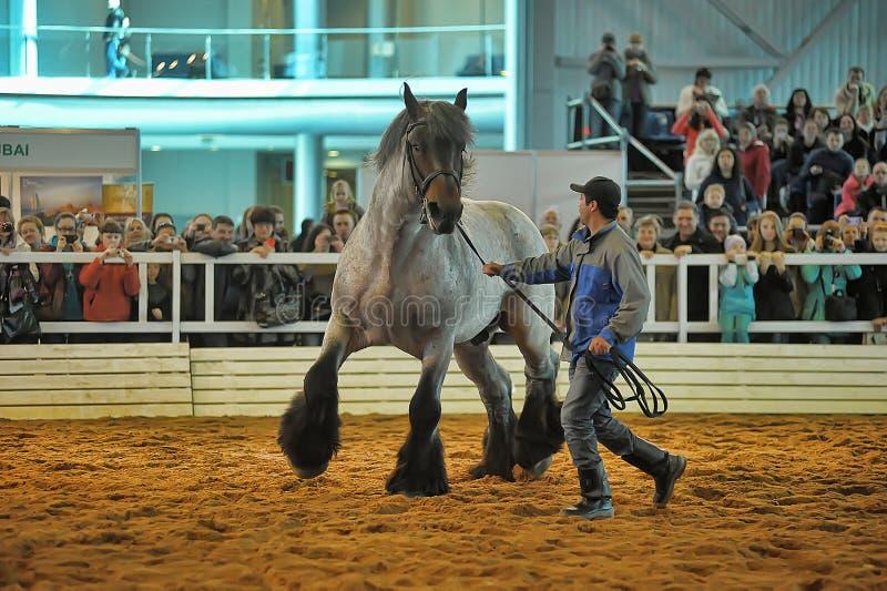 Download Лошади породы выставки редакционное стоковое изображение. изображение насчитывающей обсудите - 40585339