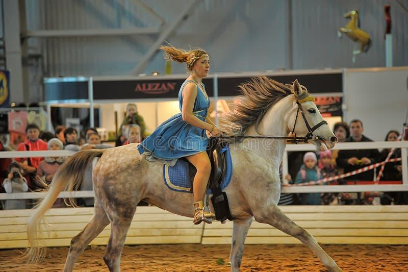 Download Лошади породы выставки редакционное изображение. изображение насчитывающей breding - 40586055