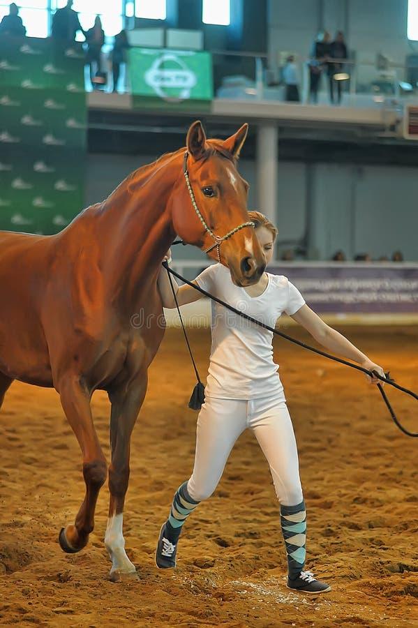 Download Лошади породы выставки редакционное изображение. изображение насчитывающей выставка - 40586350