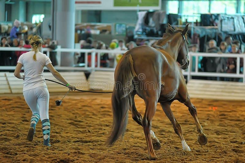 Download Лошади породы выставки редакционное стоковое изображение. изображение насчитывающей выставка - 40586629