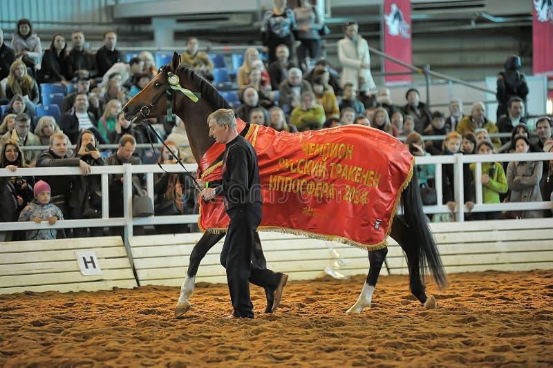Download Лошади породы выставки редакционное фото. изображение насчитывающей удобно - 40587521