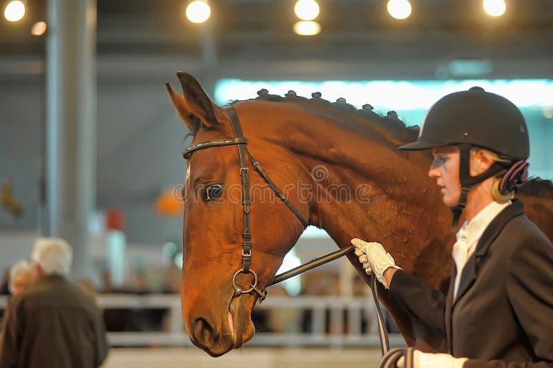 Download Лошади породы выставки редакционное стоковое фото. изображение насчитывающей повелительница - 40587633