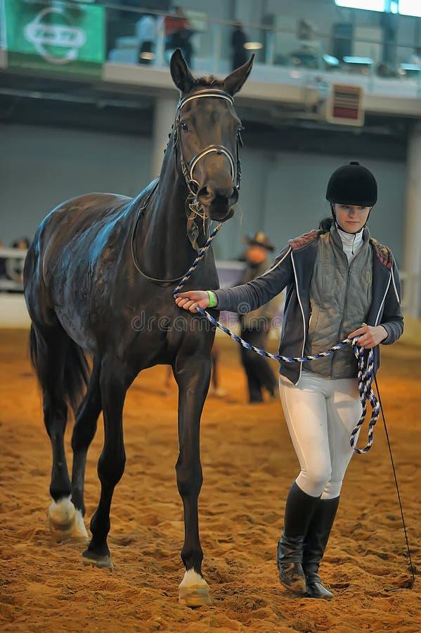 Download Лошади породы выставки редакционное стоковое изображение. изображение насчитывающей клубы - 40587929