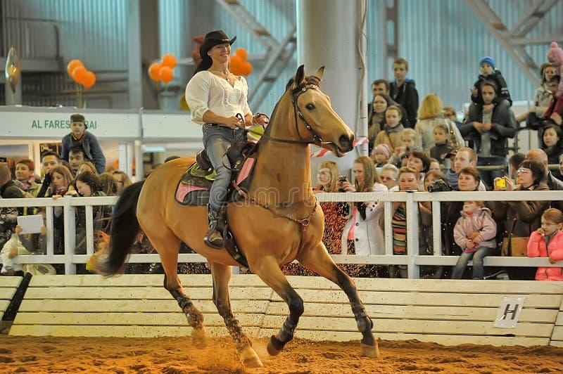 Download Лошади породы выставки редакционное стоковое изображение. изображение насчитывающей трава - 40588239