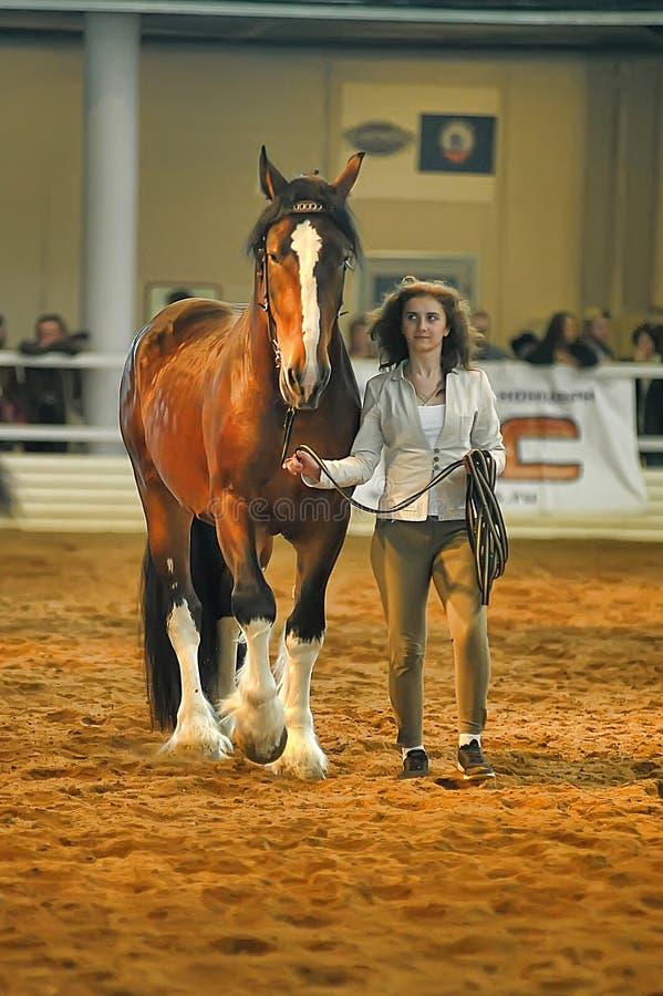Download Лошади породы выставки редакционное фото. изображение насчитывающей конкуренция - 40588506
