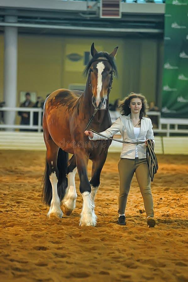 Download Лошади породы выставки редакционное стоковое изображение. изображение насчитывающей трава - 40588524
