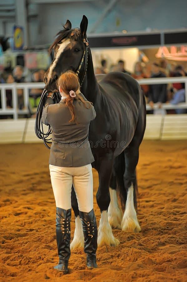 Download Лошади породы выставки редакционное стоковое фото. изображение насчитывающей удобно - 40588598