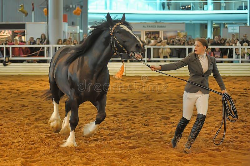 Download Лошади породы выставки редакционное изображение. изображение насчитывающей удобно - 40588610