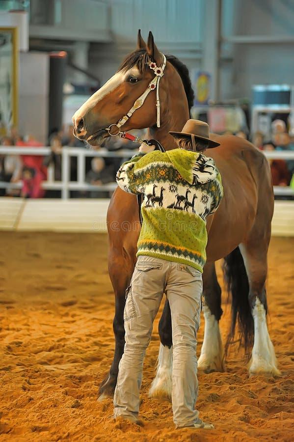 Download Лошади породы выставки редакционное стоковое изображение. изображение насчитывающей angoras - 40588724