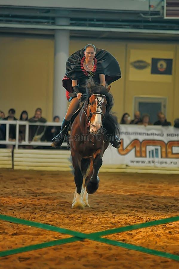 Download Лошади породы выставки редакционное изображение. изображение насчитывающей дело - 40588750