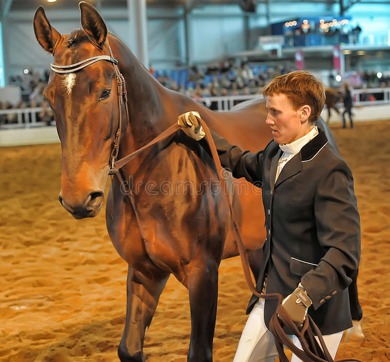 Download Лошади породы выставки редакционное фото. изображение насчитывающей конноспортивно - 40589491