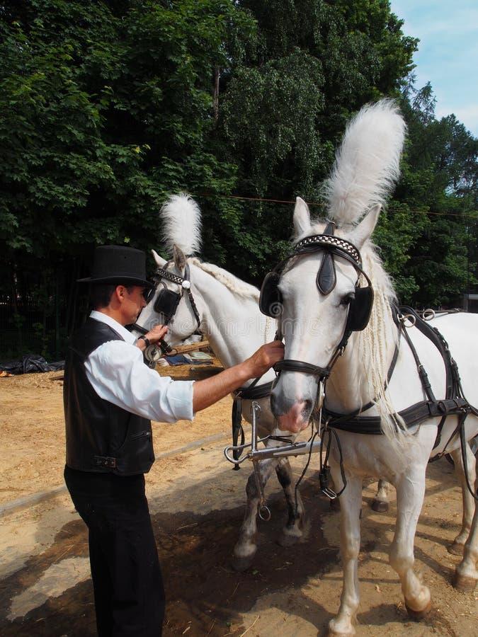 Лошади проводки человека стоковое изображение