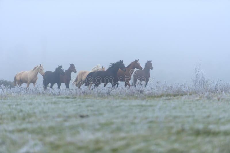 Download Лошади стоковое изображение. изображение насчитывающей mammal - 33735615