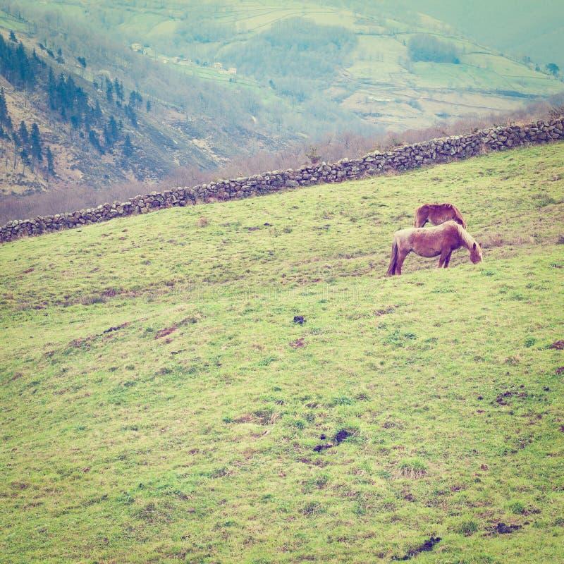 Download Лошади стоковое фото. изображение насчитывающей пасите - 41656618